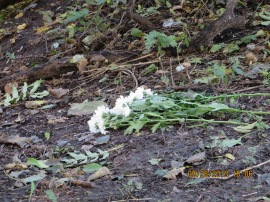 Flowers left on the edge of the Babi Yar ravine where the Nazis staged among the Holocaust largest slaughters.